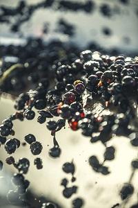 Découvrez les Vignobles Guindeuil