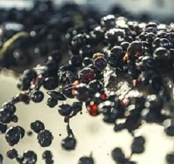 raisin guindeuil